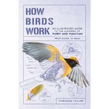 How Birds Work by Marianne Taylor