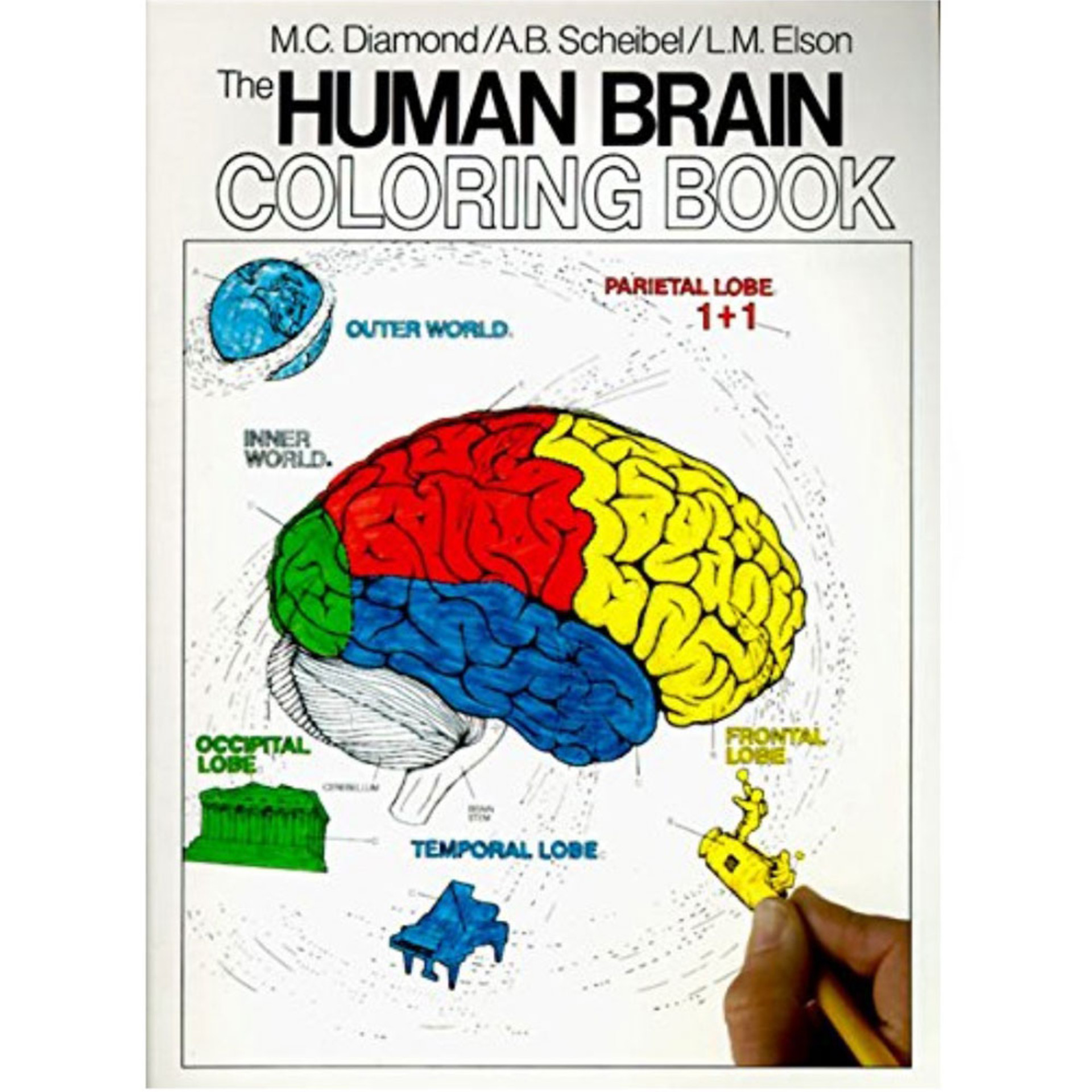 The Human Brian Coloring Book by M.C. Diamond, A.B. Scheibel, and L.M. Elson