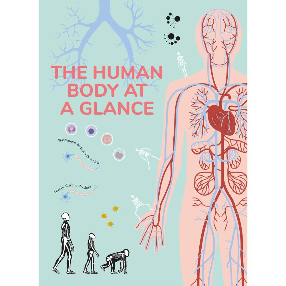 The Human Body at a Glance by Cristina Peraboni
